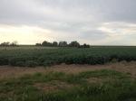 2.cornagroenveld-deverwondering-nieuwe-werkplek-verbouwing-wieringen-boerderij-yoga-retraite-opstellingen-verdiepingsdag-meditatie-stilte-rust