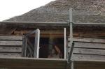 345.cornagroenveld-deverwondering-nieuwe-werkplek-verbouwing-wieringen-boerderij-yoga-retraite-opstellingen-verdiepingsdag-meditatie-stilte-rust.jpgjpg