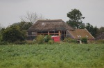 382.cornagroenveld-deverwondering-nieuwe-werkplek-verbouwing-wieringen-boerderij-yoga-retraite-opstellingen-verdiepingsdag-meditatie-stilte-rust.jpgjpg